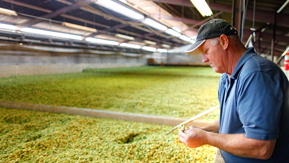 Hop Extract: Bring On Great Taste